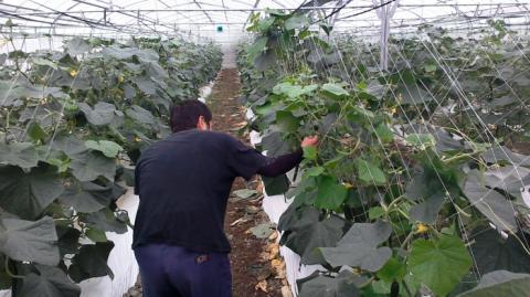 百次農園【農作業スタッフ】の求人募集画像